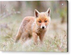 Little Fox Kit, Big World Acrylic Print