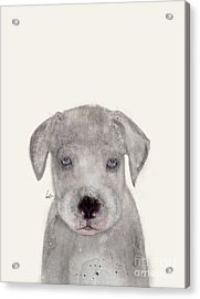 Acrylic Print featuring the painting Little Great Dane by Bri B
