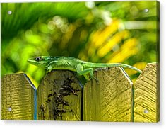 Little Green Visitor Acrylic Print