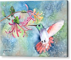 Little Hummingbird Acrylic Print
