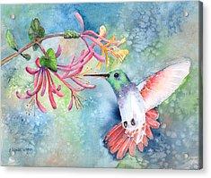 Little Hummingbird Acrylic Print by Arline Wagner