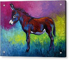 Little Jenny - Burro Acrylic Print by Marion Rose