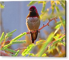 Little Jewel With Wings Fourth Version Acrylic Print