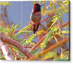 Little Jewel With Wings Acrylic Print