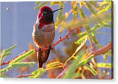 Little Jewel With Wings Second Version Acrylic Print