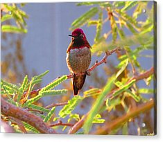Little Jewel With Wings Third Version Acrylic Print