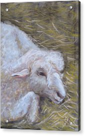 Little Lamb Acrylic Print by Wendie Thompson