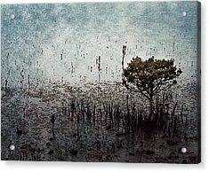 Little Mangrove Acrylic Print