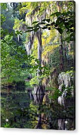 Little Moss Acrylic Print by Don Prioleau