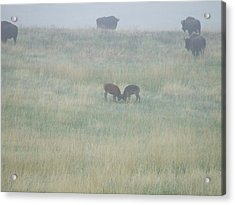 Little Ones At Play Acrylic Print by Dennis Wilkins