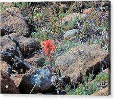 Little Orange Wild Flower Acrylic Print by Debbie Wells