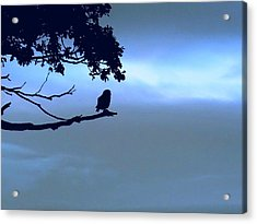 Little Owl Watching Acrylic Print
