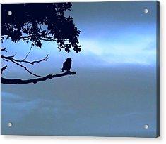 Little Owl Watching Acrylic Print
