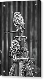 Little Owls Black And White Acrylic Print