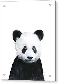 Little Panda Acrylic Print by Amy Hamilton
