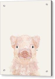 Little Pig Acrylic Print by Bri B