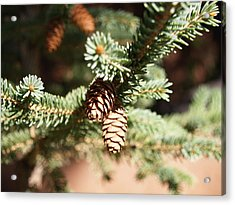 Little Pine Cones Acrylic Print by James Granberry