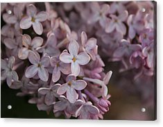 Little Pink Stars Acrylic Print by Christin Brodie