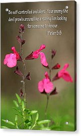 Little Pink Wildflowers With Scripture Acrylic Print by Linda Phelps