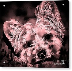 Acrylic Print featuring the photograph Little Powder Puff by Kathy Tarochione