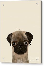 Acrylic Print featuring the photograph Little Pug by Bri B