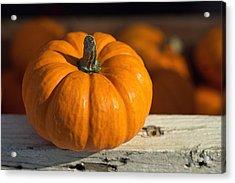Little Pumpkin Acrylic Print by Joseph Skompski
