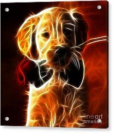 Little Puppy In Love Acrylic Print