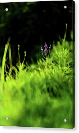 Acrylic Print featuring the photograph Little Purple Flower by Onyonet  Photo Studios