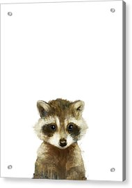 Little Raccoon Acrylic Print by Amy Hamilton