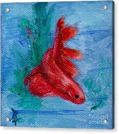 Little Red Betta Fish Acrylic Print