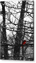 Little Red Bird Acrylic Print by Simone Hester