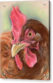 Little Red Hen Acrylic Print