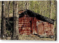 Little Red Shed Acrylic Print by Ginger Barritt