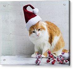 Little Santa Helper II Acrylic Print by Anastasy Yarmolovich