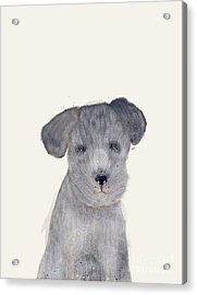 Acrylic Print featuring the painting Little Schnauzer by Bri B
