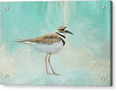 Little Seaside Friend Acrylic Print by Jai Johnson