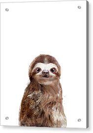 Little Sloth Acrylic Print by Amy Hamilton