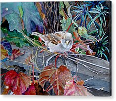Little Sparrow Acrylic Print by Gail Chandler
