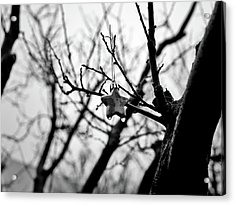 Acrylic Print featuring the photograph Little Star by Lennie Green