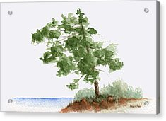 Little Tree 3 Acrylic Print