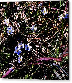 Acrylic Print featuring the photograph Little Twinkles by HweeYen Ong