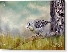 Little Warbler In Louisiana Winter Acrylic Print by Bonnie Barry