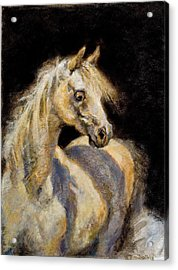 Little White Mare Acrylic Print