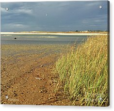 Acrylic Print featuring the photograph Live Each Day by Michelle Wiarda