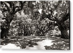 Live Oak Allee Infrared Acrylic Print