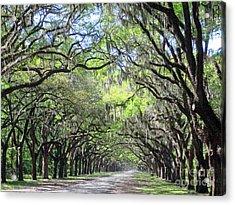 Live Oak Canopy Acrylic Print