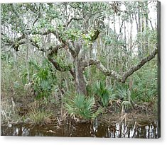 Acrylic Print featuring the photograph Live Oak Dancing by Jeanne Kay Juhos