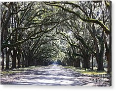 Live Oak Lane In Savannah Acrylic Print