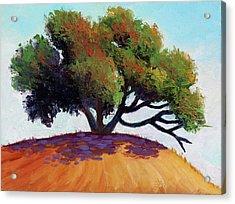 Live Oak Tree Acrylic Print