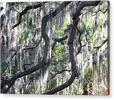 Live Oak With Spanish Moss And Palms Acrylic Print by Carol Groenen